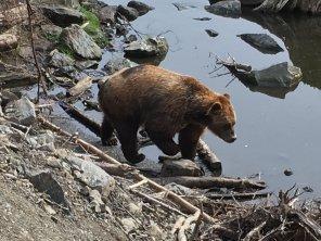 Fortress Of The Bear Sitka Alaska 05