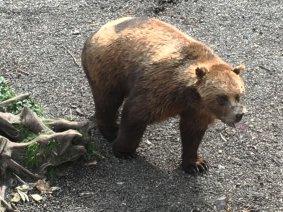 Fortress Of The Bear Sitka Alaska 07