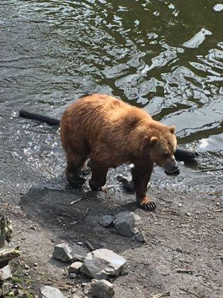 Fortress Of The Bear Sitka Alaska 09