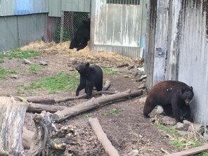 Fortress Of The Bear Sitka Alaska 10