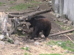 Fortress Of The Bear Sitka Alaska 11