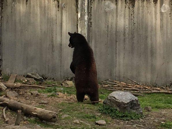 Fortress Of The Bear Sitka Alaska 12