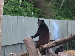 Fortress Of The Bear Sitka Alaska 14