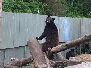 Fortress Of The Bear Sitka Alaska 15