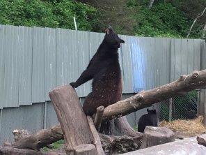 Fortress Of The Bear Sitka Alaska 18