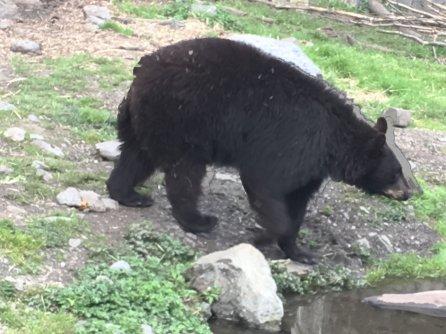 Fortress Of The Bear Sitka Alaska 19