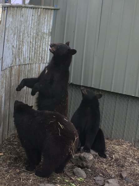 Fortress Of The Bear Sitka Alaska 29