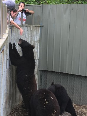 Fortress Of The Bear Sitka Alaska 30