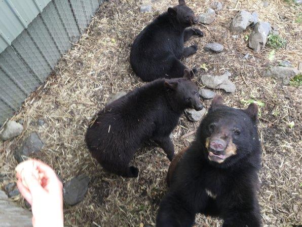 Fortress Of The Bear Sitka Alaska 31