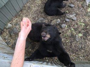 Fortress Of The Bear Sitka Alaska 32