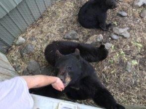 Fortress Of The Bear Sitka Alaska 33