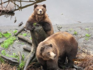 Fortress Of The Bear Sanctuary