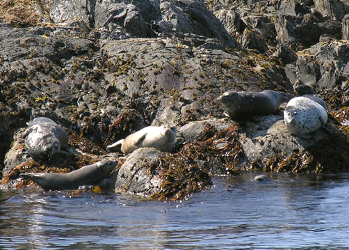 Group Of Seals by the water
