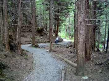 Trees on a Trail in Sitka, AK