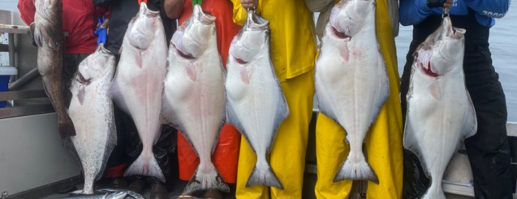 salmon and halibut caught in sitka alaska