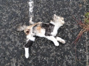 Ran Over a Cat and Slept With a Spider: Day 6