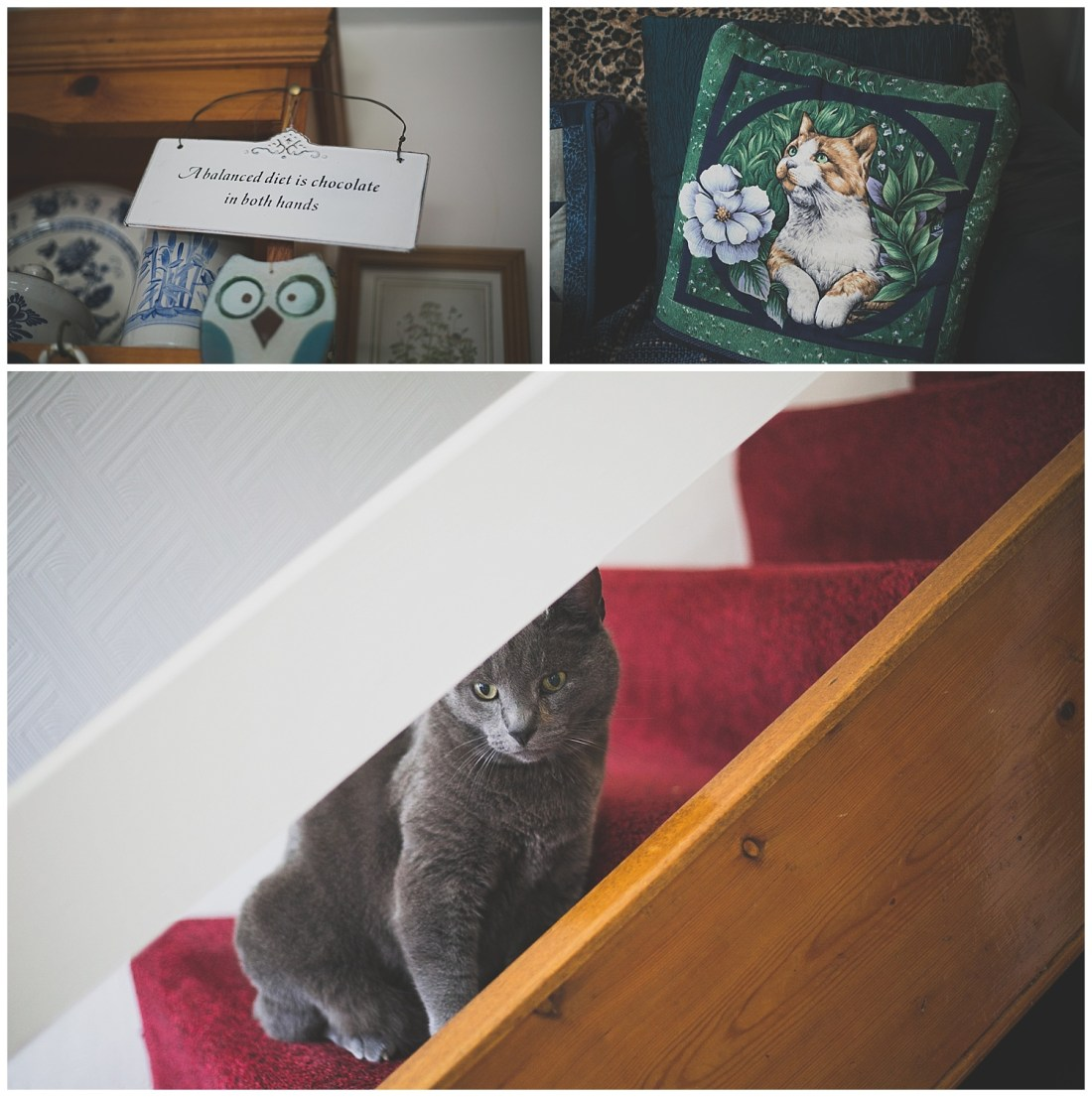 Adorable grey cat sitting on the stairs
