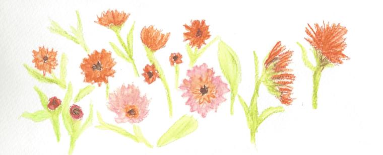 Flowers garden Vida Verde 2.15.16