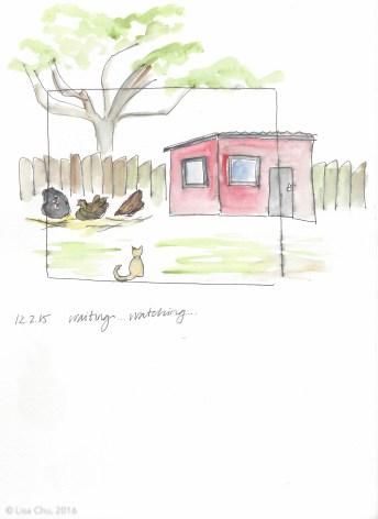 Hourly chicken comic 12.2.15 2