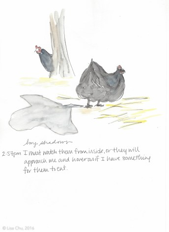 Hourly chicken comic 2.57pm 12.2.15