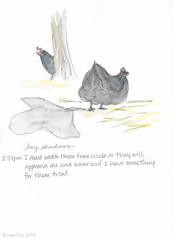 Hourly chicken comic 2.57pm 12.2.15