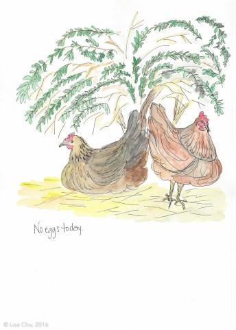 No eggs today 11.25.15