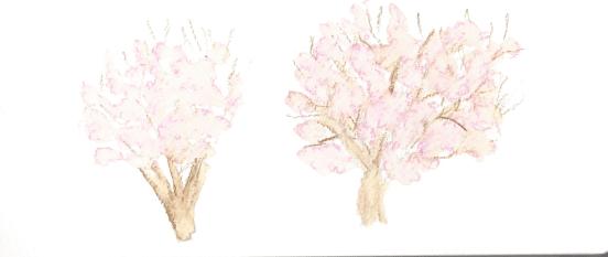 Pink trees Vida Verde 2.15.16