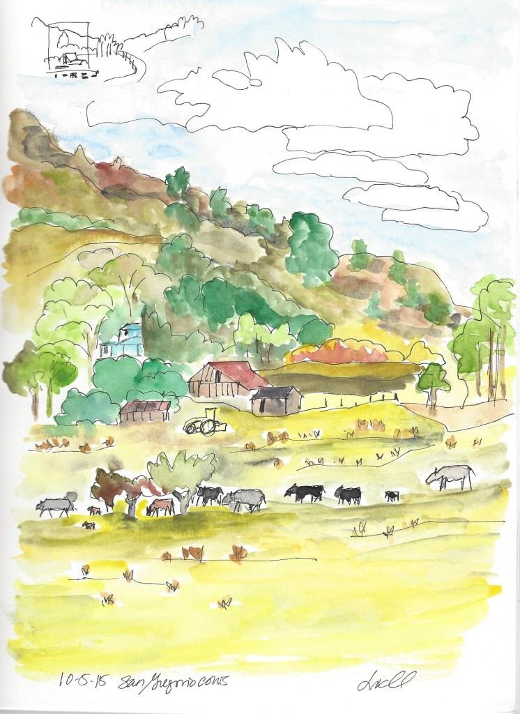 San Gregorio cows 10.5.15