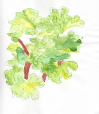 Vida Verde Rhubarb 2.15.16