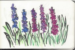 Airplane sketches of flower fields - hyacinth