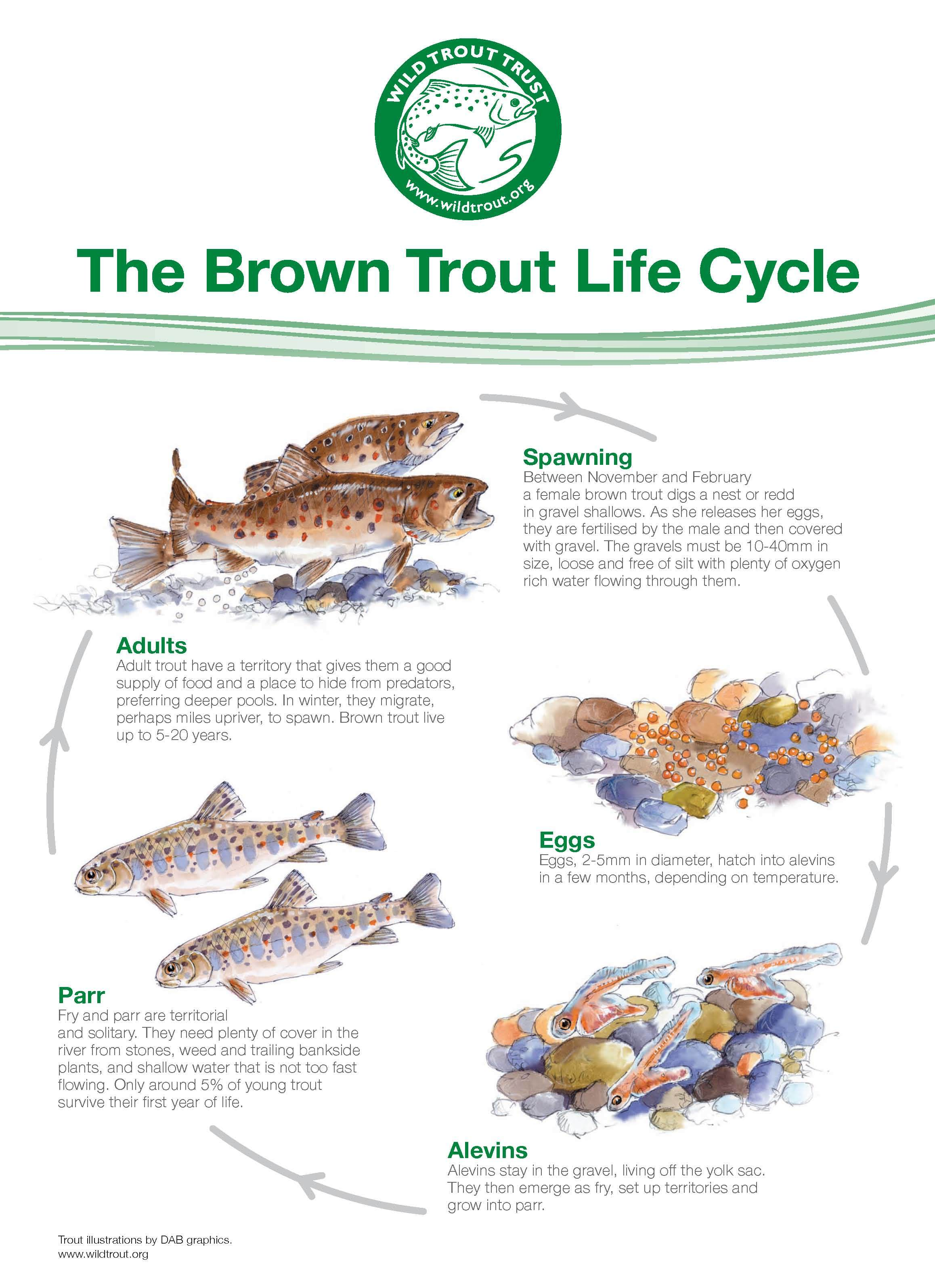 Trout Lifecycle