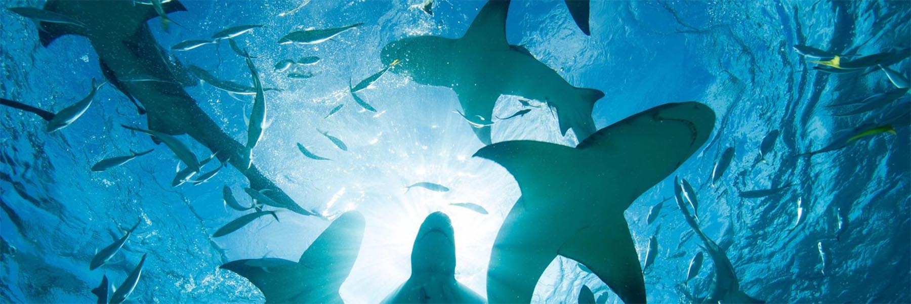Top shark diving sites in the world