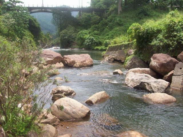 The green Kitulgala forest reserve