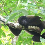 peru amazon tours 3 days - wooly monkey