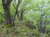 Felswald am Weißen Stein