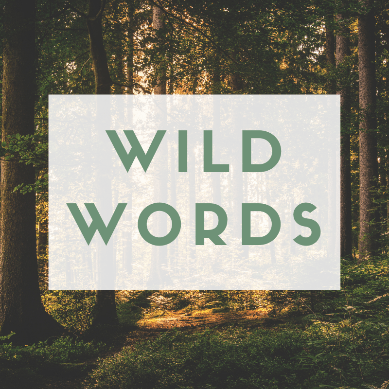 """Green text reads """"WILD WORDS"""" over an image of a sun-dappled forest."""