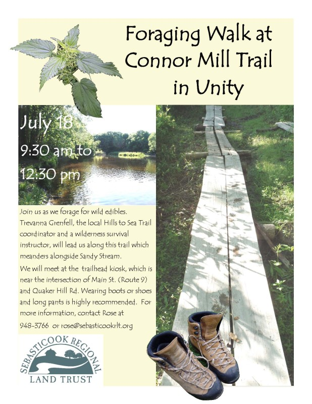 Foraging Walk @ Connor Mill Trail