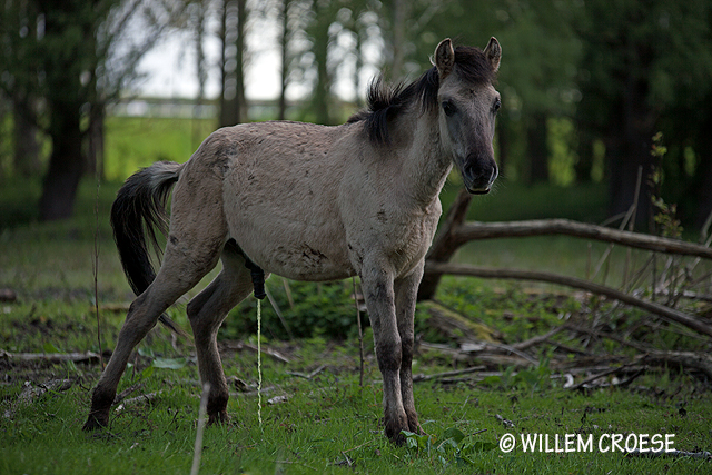 @Willem Croese - www.willemcroese.nl