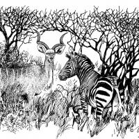 Illustration of kudu and zebra