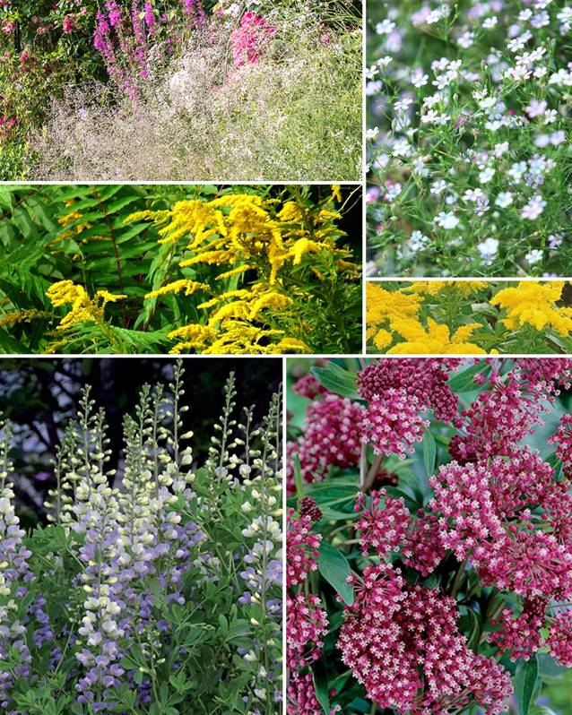 12 Plantes Vivaces Hautes Assorties Massif Aerien Collection Willemse