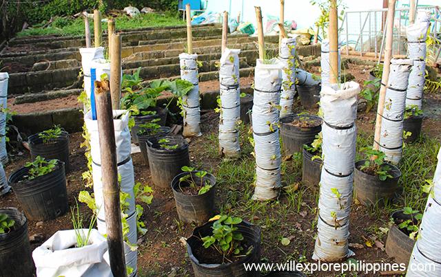 costalesnaturefarmsvermiculture1b