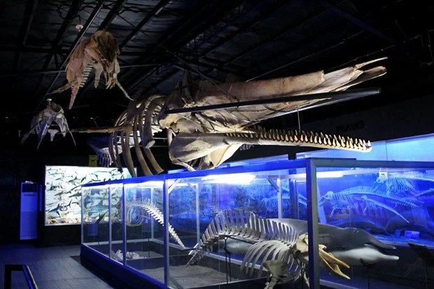 Image result for D'bone Collector Museum