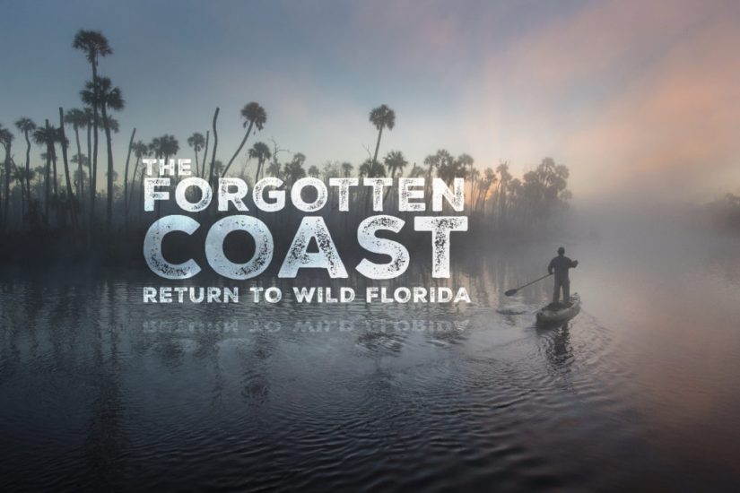 The FILM: The Forgotten Coast: Return to Wild Florida. Click to view the trailer.