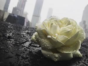 Rose 911 memorial