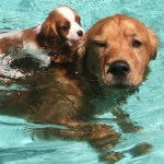 Drool in the Pool – Take Your Pooch For a Swim!  September 9