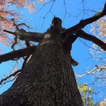 Falling in Silence by John Gresham, York River State Park Ranger
