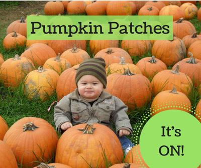 pumpkin patches williamsburg yorktown hampton