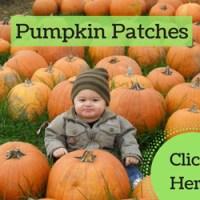 pumpkin patch williamsburg