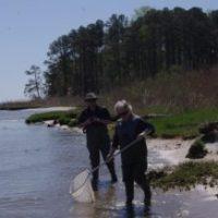 York River Stream to Sea Stroll