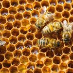 🍯 Honey Bee Day at Virginia Living Museum on Aug. 17
